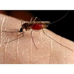 Mosquito Pest Control Services