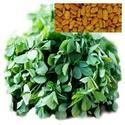 Fenugreek CO2 Extract