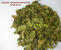 Gymnema Sylvestre Extract, Packaging Type: Bag, Pack Size: 20Kg