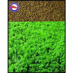 Lucern Seeds (Alfalfa Seeds), For Agriculture, Pack Size: 25kg