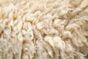 White Washed Sheep Wool