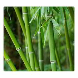 Green Heaven Bamboo Extract, Packaging Type: Polybag, Pack Size: 5 Kg