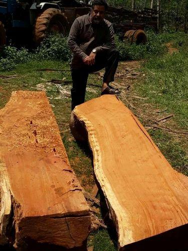 Tanzania Teak Wood Burma Teakwood Tiger Teak Tanzania