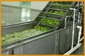 Automatic Vegetable Washing Machine