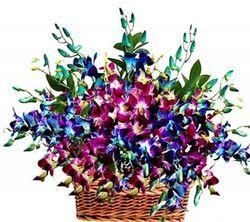Basket Arrangement of Mixed Orchid