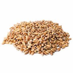 PJ Brown Wheat Grain, Packaging Type: Pp Bag, Packaging Size: 25 Kg And 50 Kg