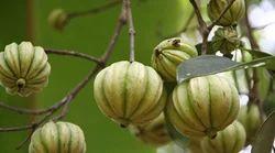 recipe: organic herbal extracts [38]