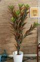 Hyperboles Artificial Croton Plant