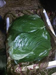 Bangla Paan - Betel Leaf