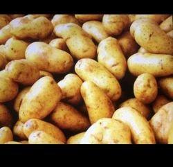 Export Quality Potato, Packaging: Plastic Bag