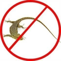 Lizard Pest Control Services