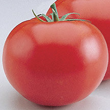 Red Colour Tomato Seed