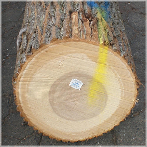 Weight Of Tree Wood: White Poplar Wood Round Logs At Rs 350 /cubic Feet