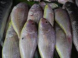 Sankara fish is good for pregnancy