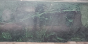 Green Granite Stone