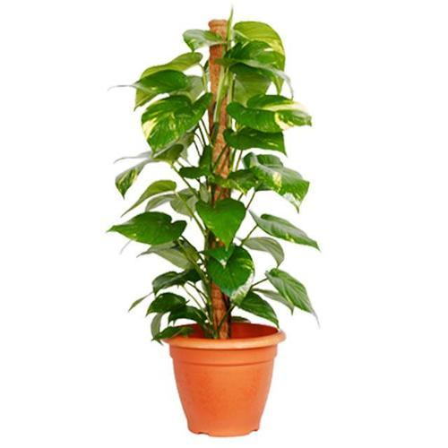 Product Image Al Plants Get Best Quote Forever Green Nursery