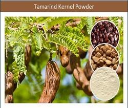 Nutrition Rich Tamarind Kernel Powder