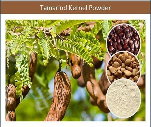50 G Nutrition Rich Tamarind Kernel Powder Packaging Bags Rs 132000 Metric Ton Id 13928313462