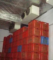 Orange Cold Storage De Greening Room, Capacity / Size Of Storage: 10 x 10 x 10 Ft