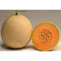 Golden Glory Melon