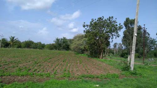 Agriculture Land , Size/ Area: 2 Acres, Farm & Land | ID: 16592988255