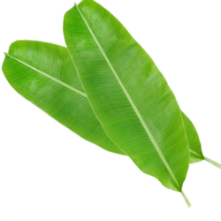 Banana Leaves In Chennai Tamil Nadu