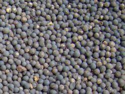 Embelia Ribes Seed Extract