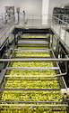 Lemon Processing Plant