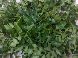 Drykari Patta/ Curry Leaves