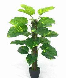 Hyperboles Artificial Money Plant Tree