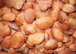 Karanj Seed