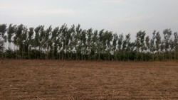 Agricultural Properties, Size/ Area: 13 Gunta