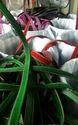 12 Mm Colour Velvet Ribbon