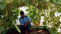 Organic Farming Consultancy Service