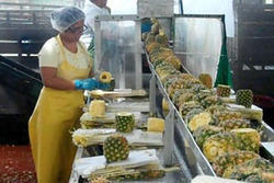 Pineapple Processing Machinery