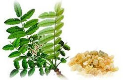 Boswellia Extract (Boswellia Serrata)