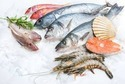Frozen Seafood Testing Services