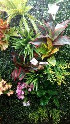 Hyperboles Artificial Vertical Garden (Wall Mats)