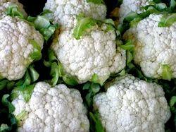Maghi Cauliflower