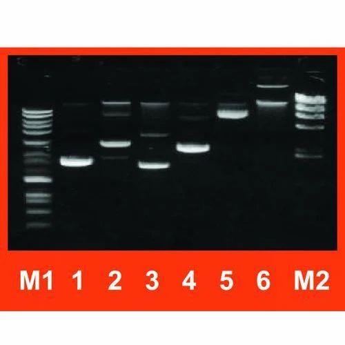 High-Speed Plasmid Mini Kit