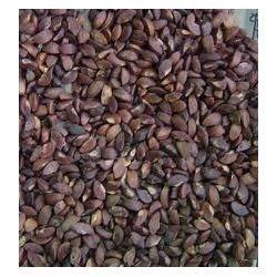 Natural Brown Sitaphal Seed for Agriculture