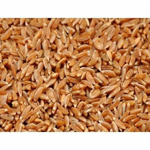 Samba Wheat Products Samba Wheat Manufacturer From Khambhat