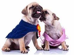 Pet Animal Matting Services