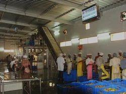 Mango Processing Plant