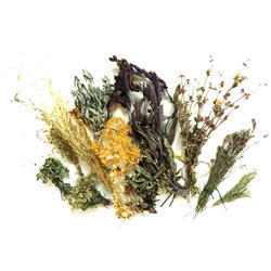 Dried herbs wholesaler amp wholesale dealers in india