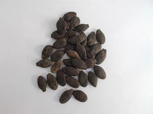 Ridge Gourd Seeds At Rs 2200  Kilogram