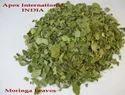 Moringa Leaves T-Cut