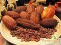 Cocoa Extract 6% 10%