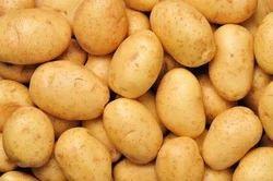 Yellow Oval Potato