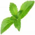 Stevia Leaves -  Stevia Rebaudiana